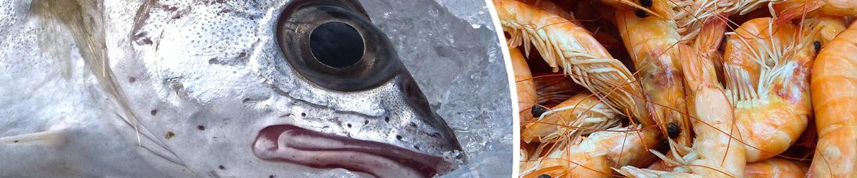 trucking_fish